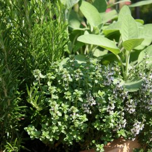 Garden Herbs Perfect for Houston | What to Plant in Houston this Spring | Blog Post about Plants Perfect for Texas Weather