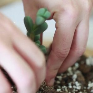 Close Up of How to Pack the Soil to make a Succulent Terrarium | How to Make a Glass Terrarium Instructional video from the Pop Shop America Craft Blog