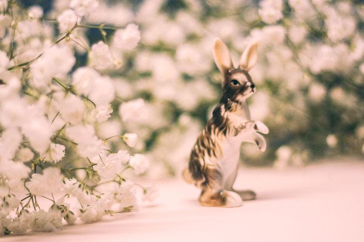 2014_Babys-Breath-Bunny