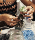 succulent terrarium workshop craft workshops art classes