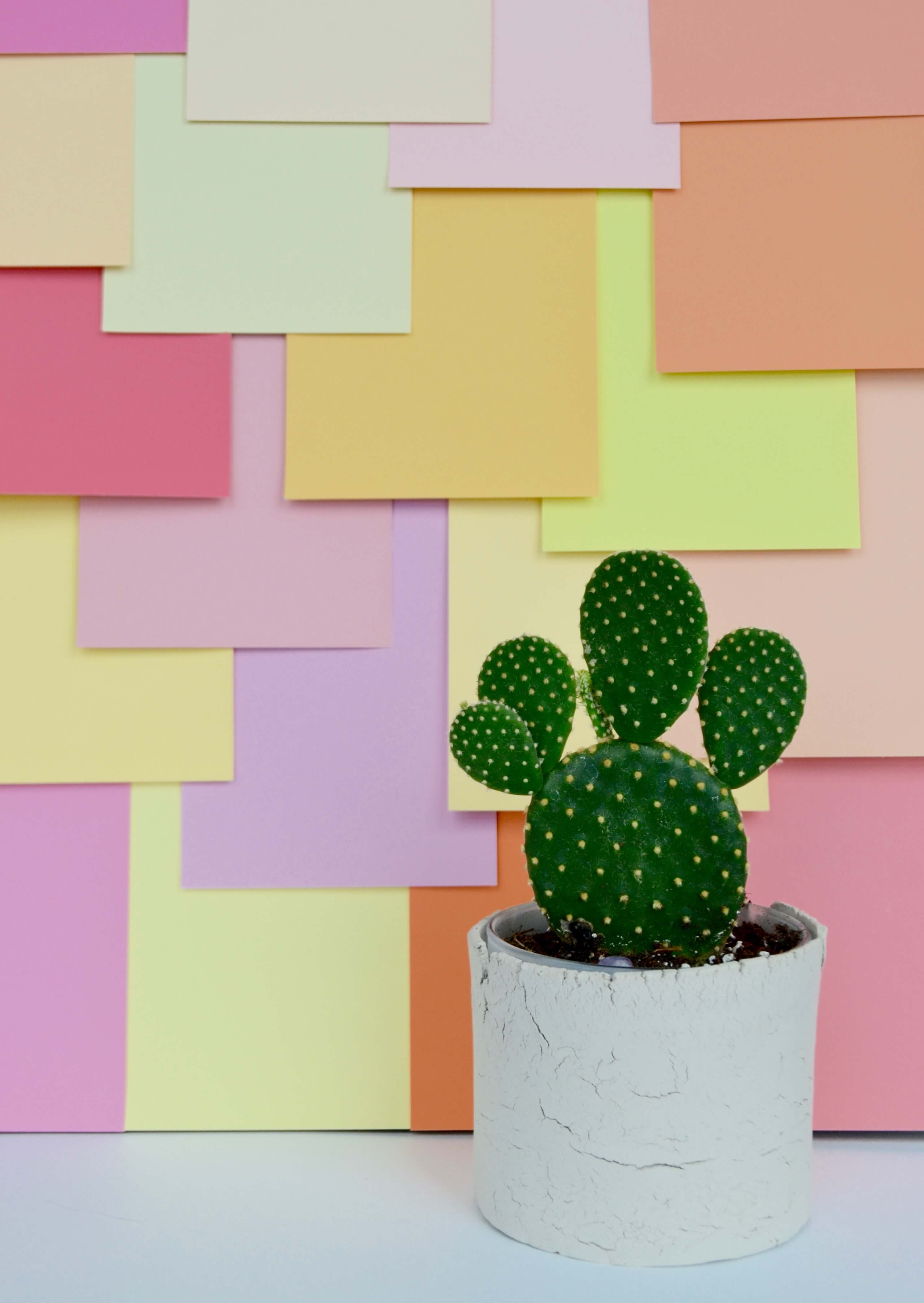 Finished Color Blocked Photo Backdrop with Cactus - Colorful Photo Backdrops