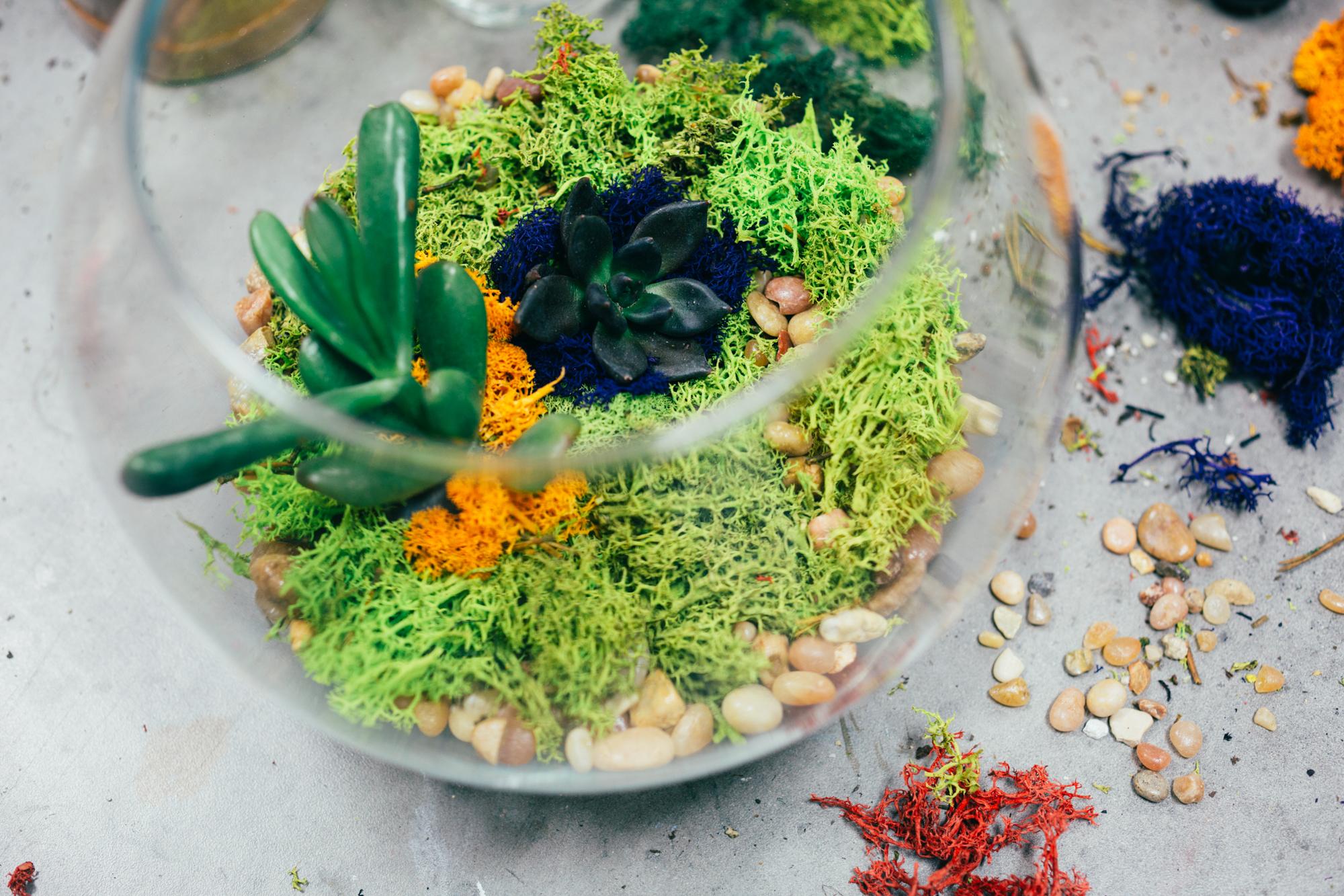 succulent terrarium from pop shop america workshop craft class houston