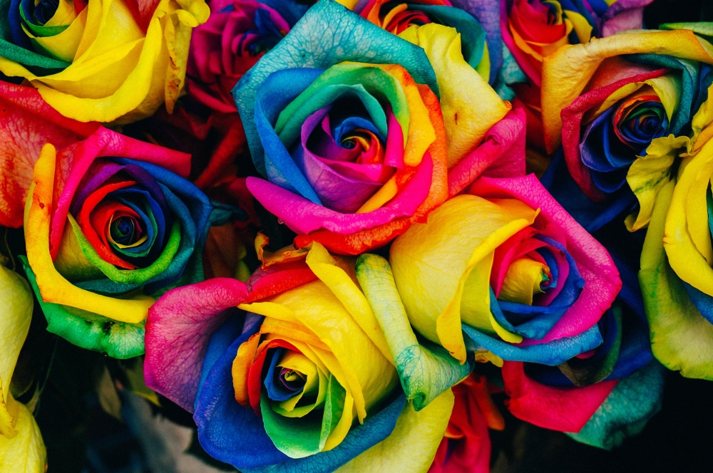 rainbow dyed flowers diy pop shop america