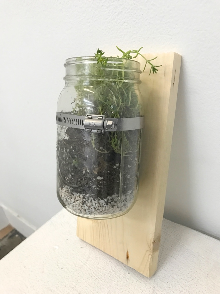 finished wood mounted mason jar terrarium planter pop shop america